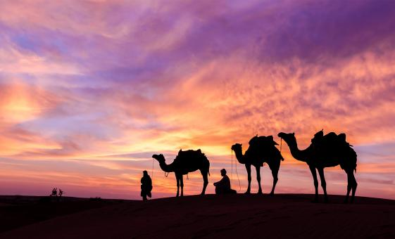 VIP Evening Desert Safari Tour with BBQ Dinner & Falcon Experience