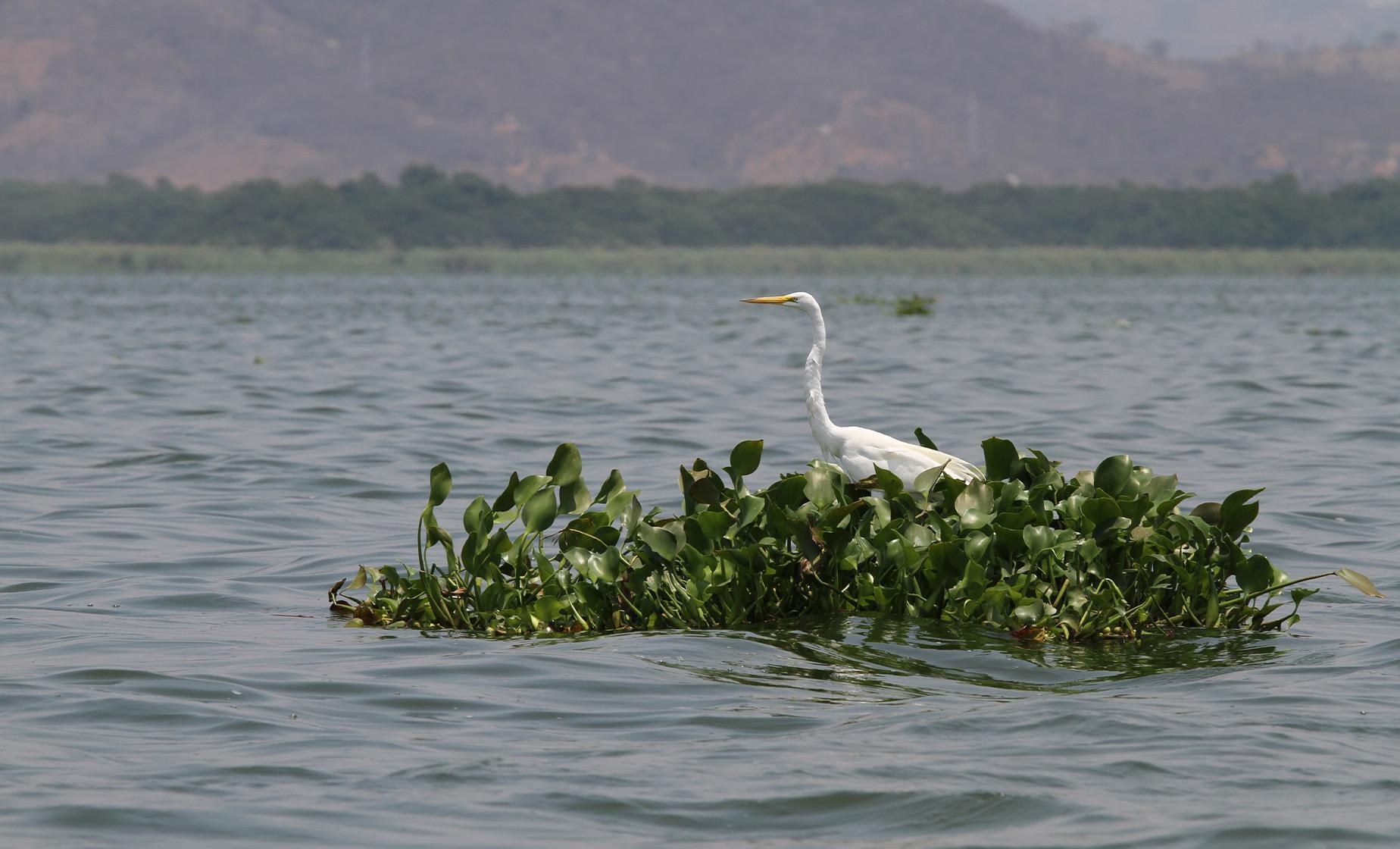 Coyuca Lagoon Paradise