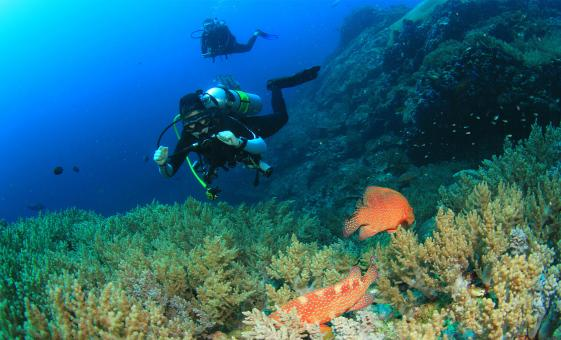Discover Scuba Diving Introduction Tour in Acapulco (PADI)