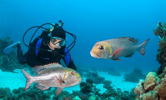 Two Tank Dive for Certified Divers Tour in Acapulco  (Sea Mountain)