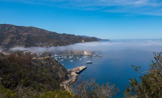 Catalina Shore Trips | Safari Island Adventure