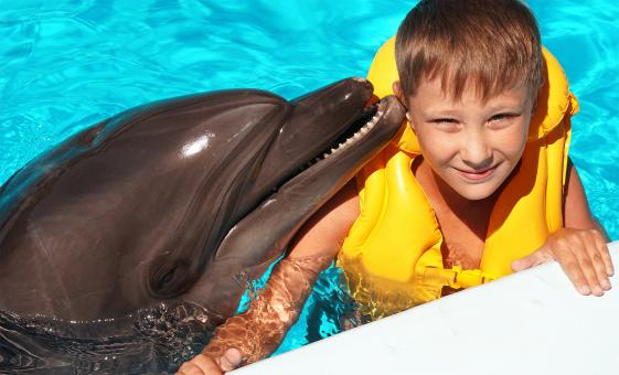 Dolphin Encounter, Cabo San Lucas tour