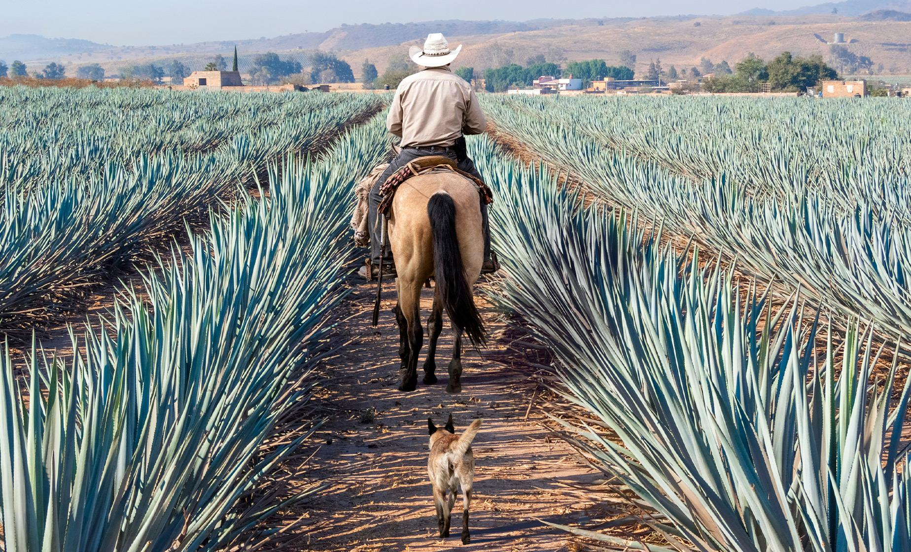 Private Tequila Factory and Local Villages