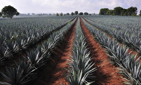 Tequila Factory and Villages