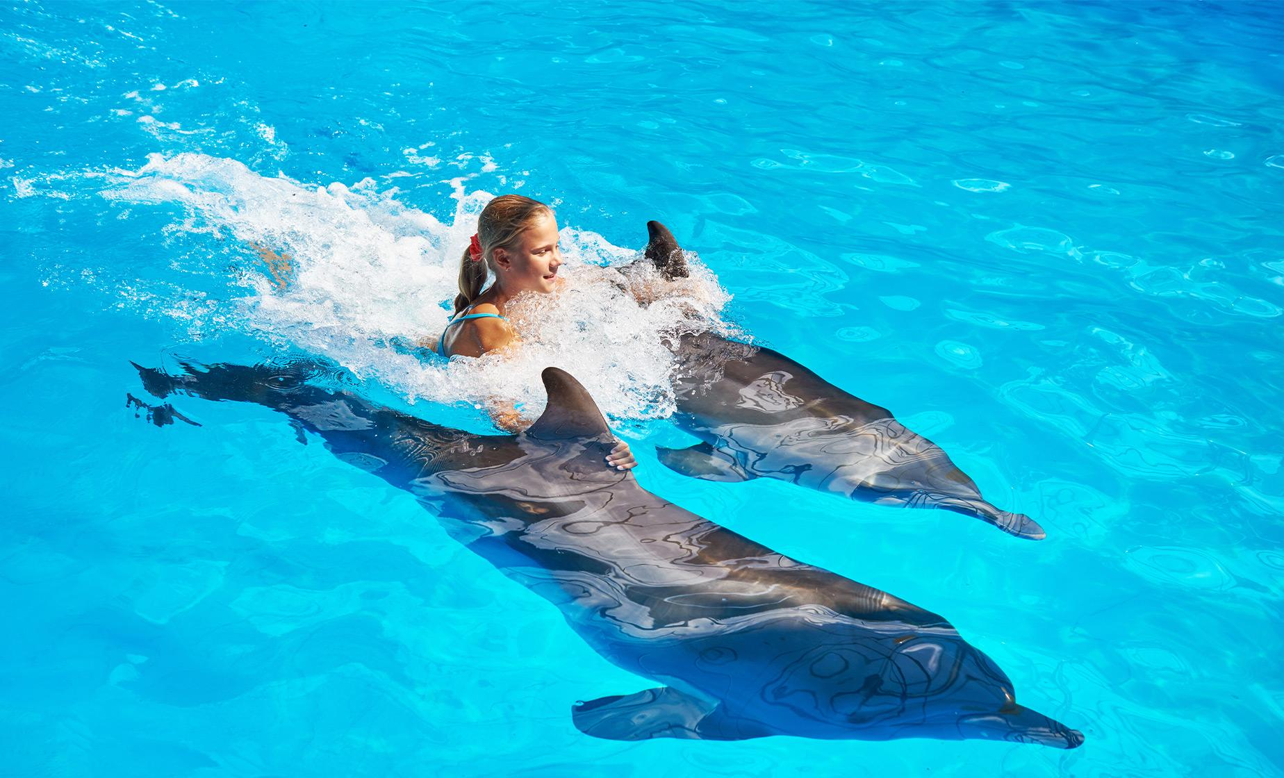 Royal Swim With Dolphins And Water Park Cruise Excursion