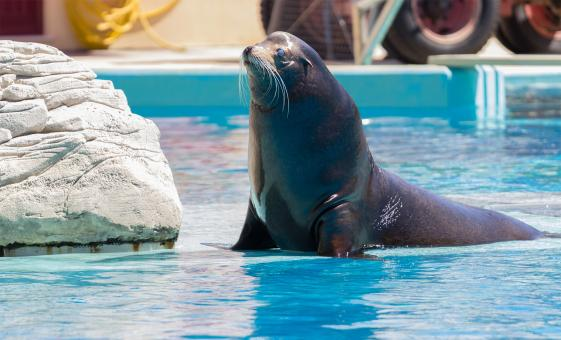 Sea Lion Encounter and Water Park Tour in Puerto Vallarta