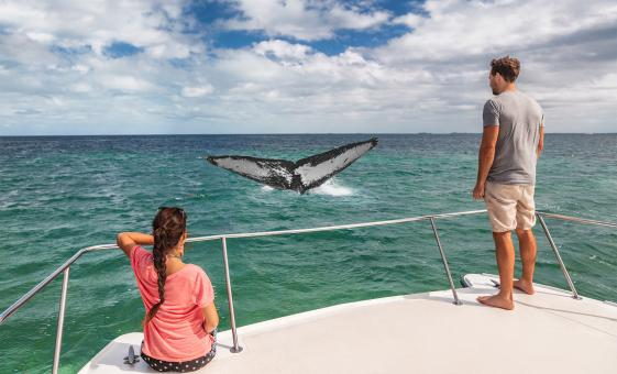 Whale Research Adventure Tour in Puerto Vallarta (Banderas Bay)