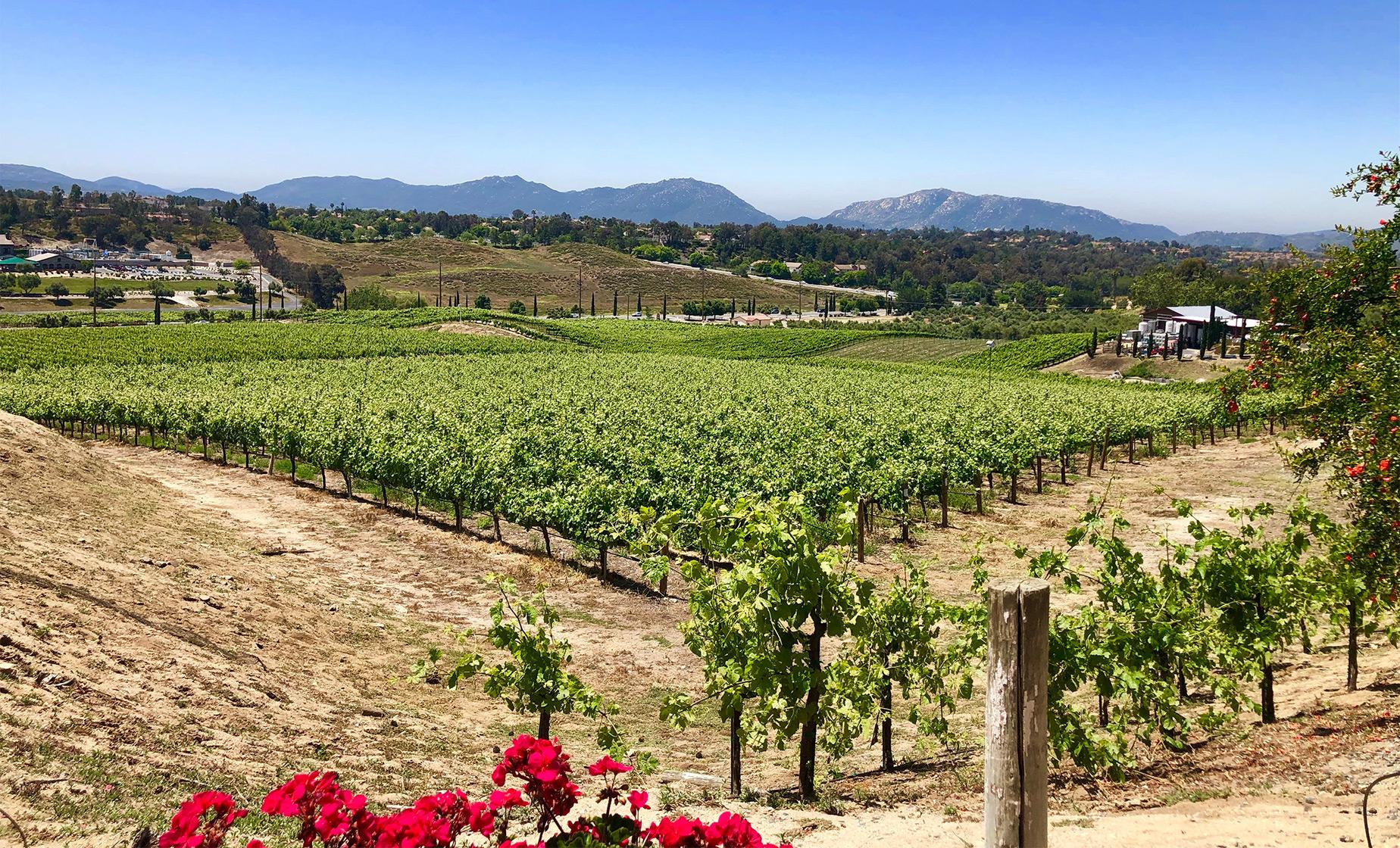 Chauffeured San Diego Winery Tour