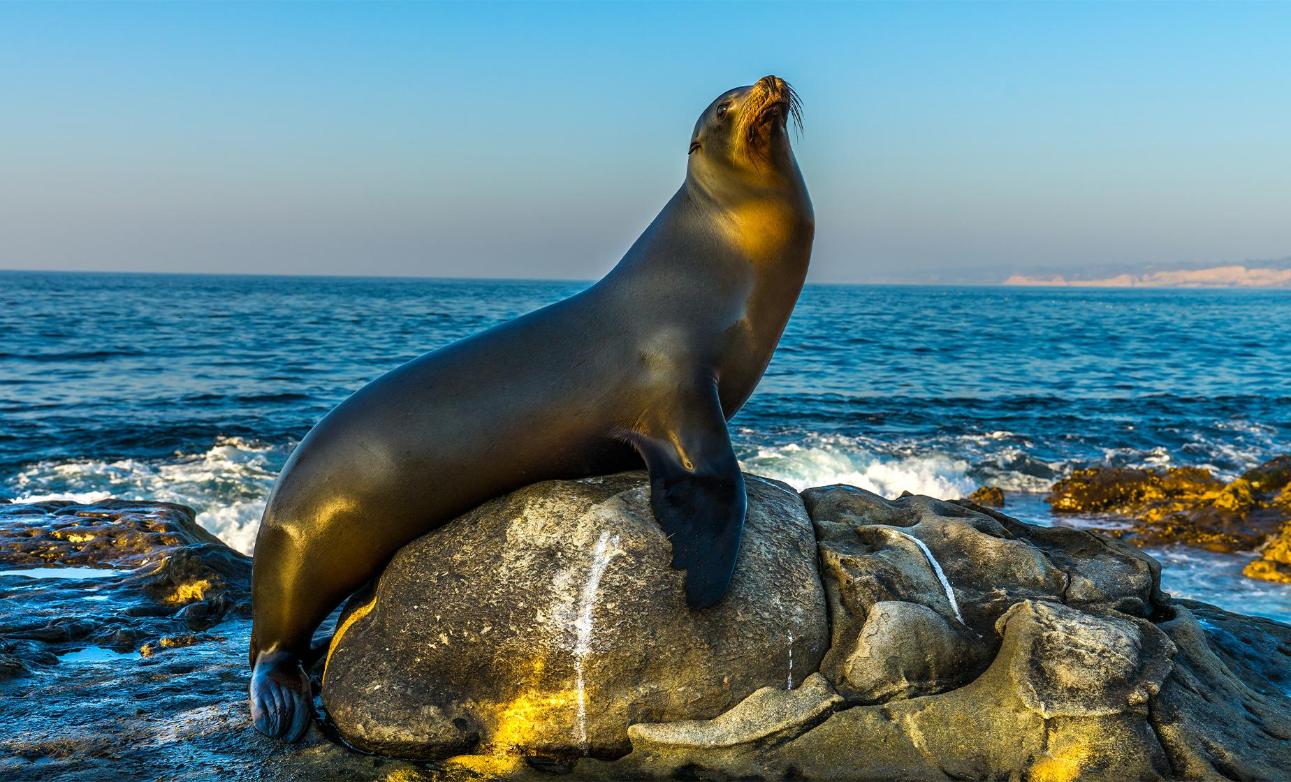 Two Hour San Diego Harbour Cruise and Sea Lion Adventure