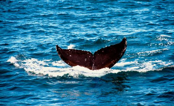 Whale Watching Cruise of San Diego Tour (San Diego National History Museum)