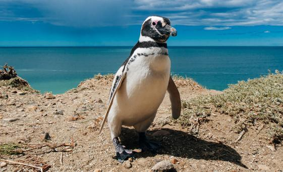 Exclusive Penguin and Seal Tour in Estancia from Puerto Madryn