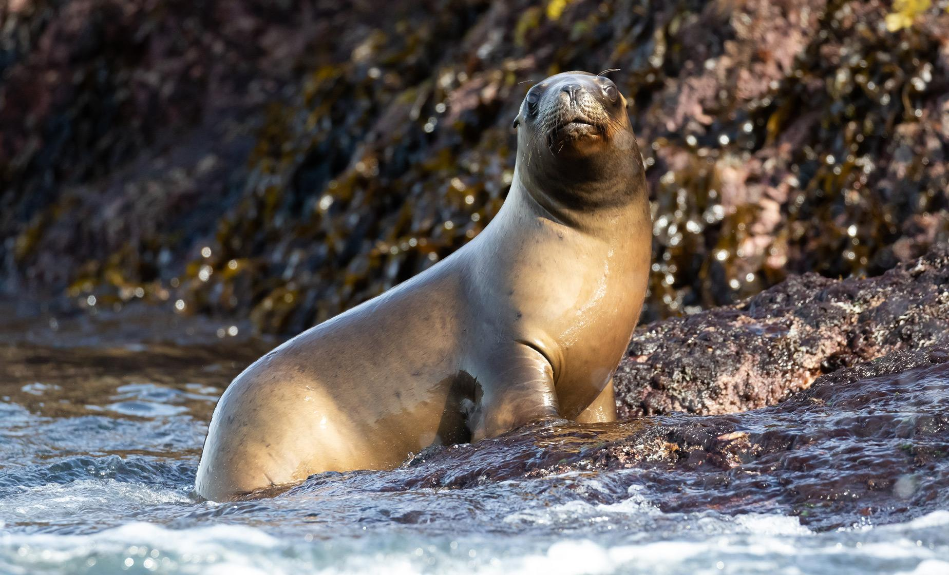Sea Lions of Punta Loma Tour from Puerto Madryn (Province of Chubut)