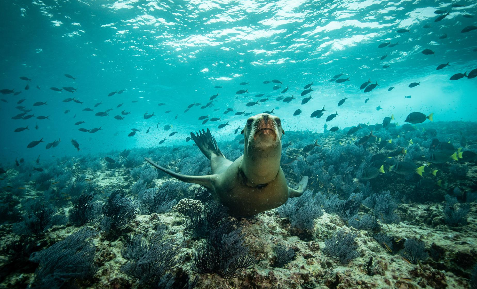 Snorkeling with Sea Lions Tour from Puerto Madryn