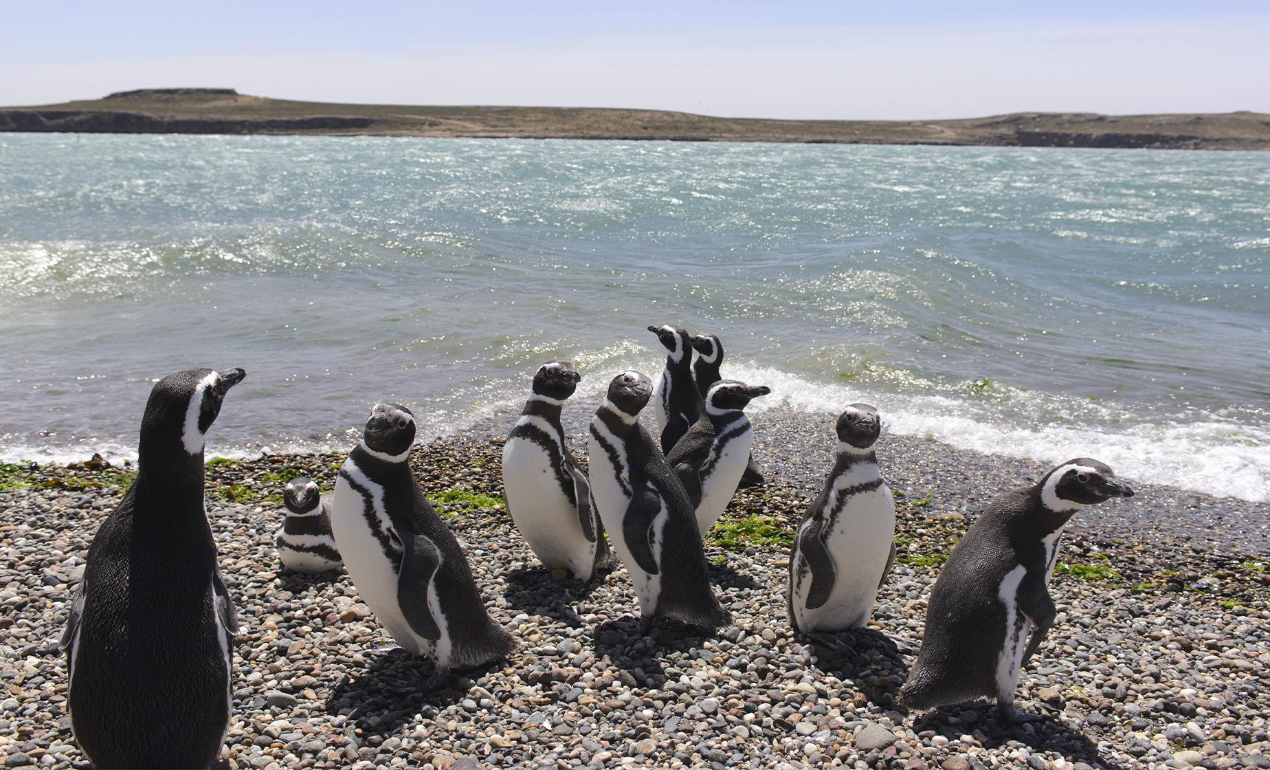 Punta Tombo Penguin Rookery