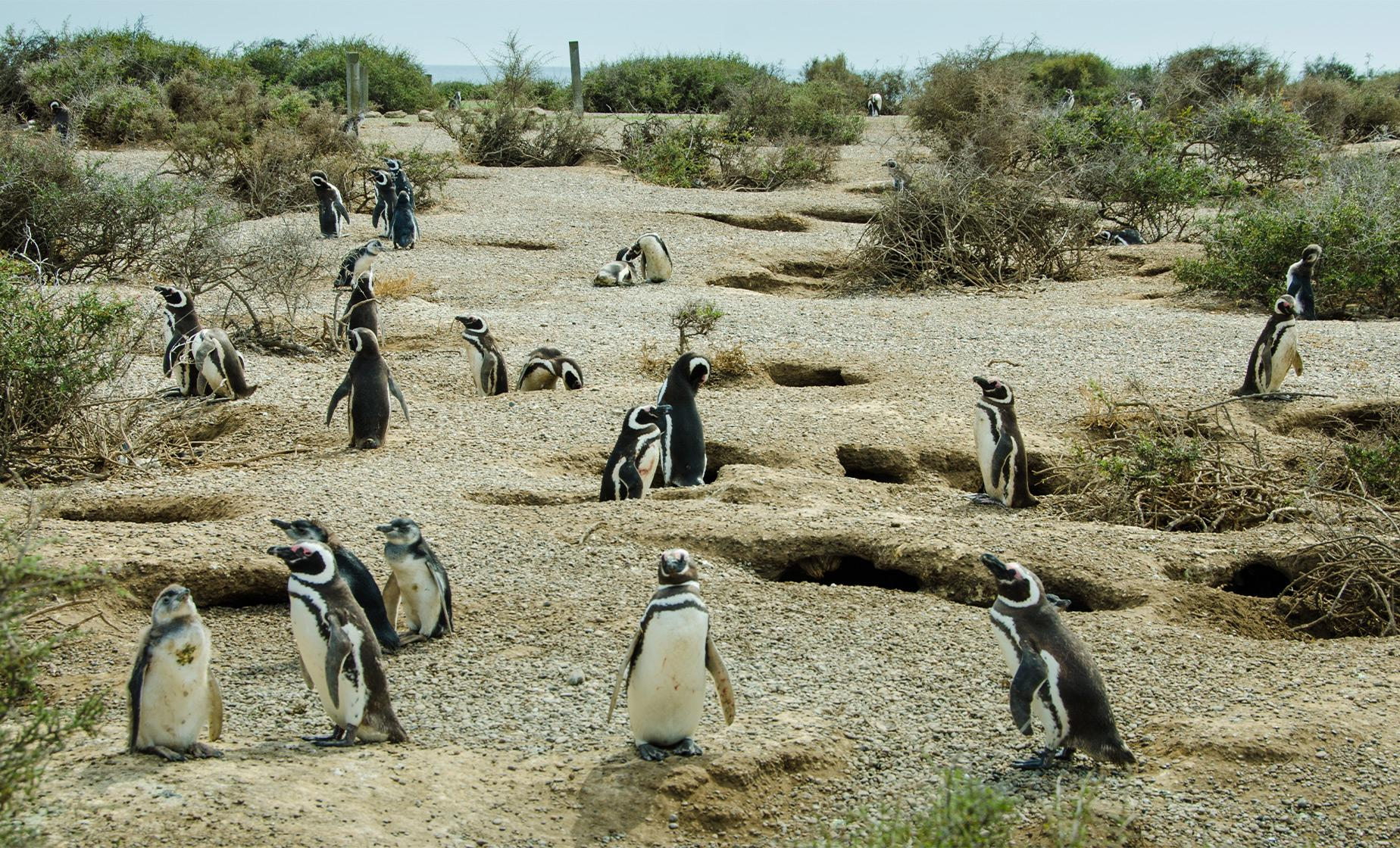 Private Punta Tombo Penguin Rookery