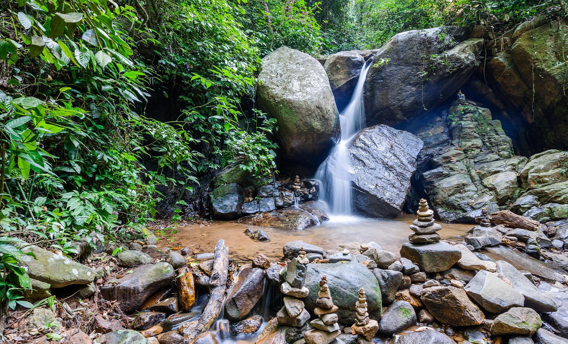 Rainforest Jeep Tour