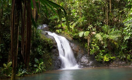 Jungle and Waterfall Trek